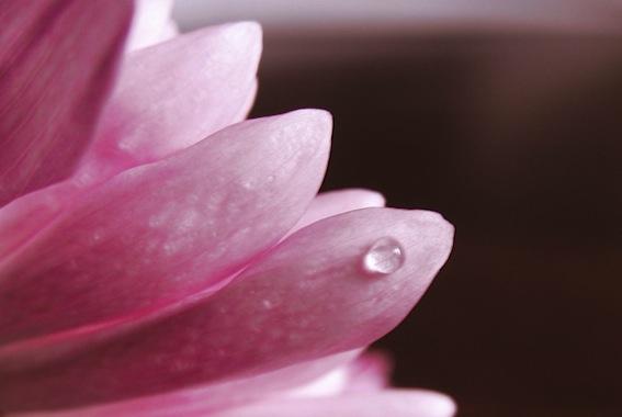 Pink-Flower-Petals-Wallpaper